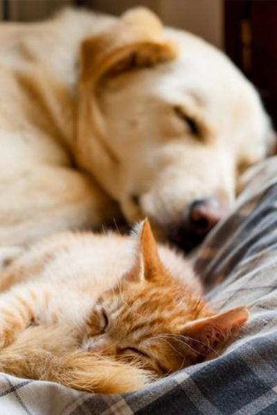 Selezione Pets